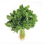 Vegetable蔬菜